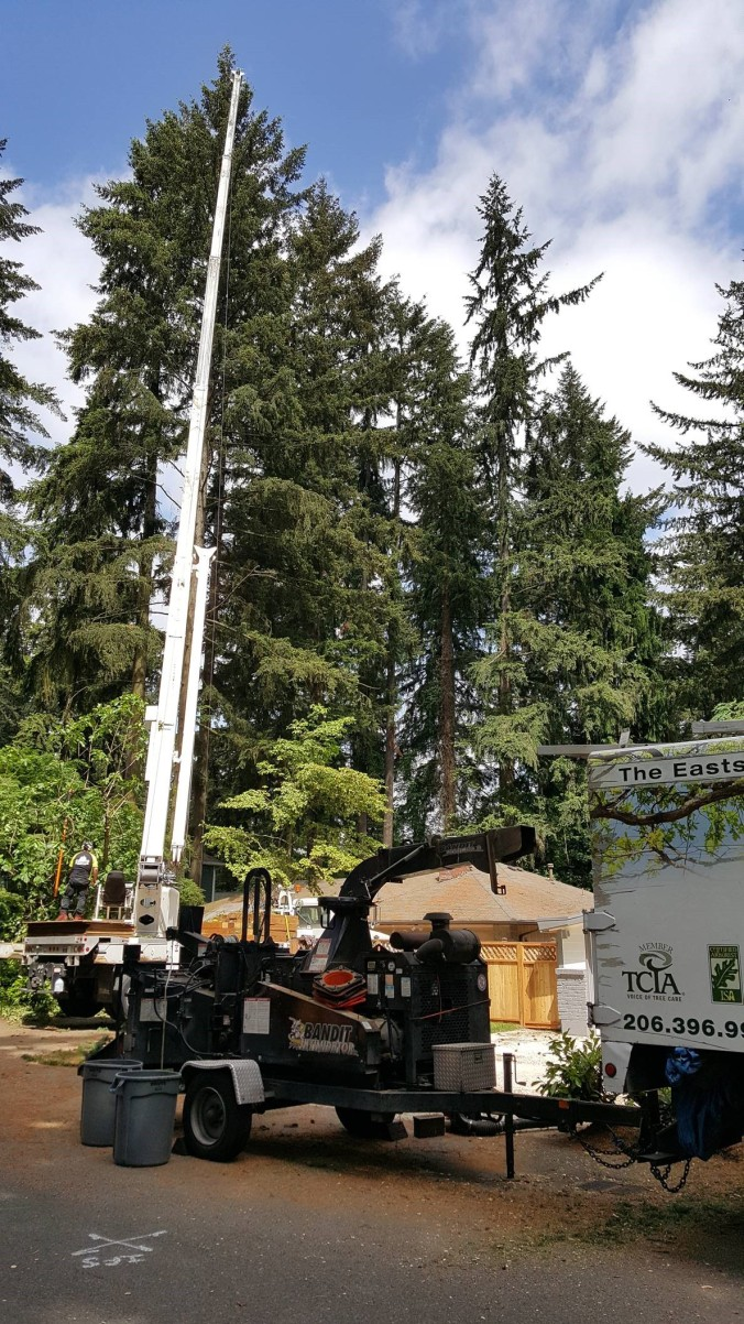 tree_removal_crane